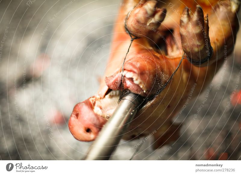 Eating To feed Meat Swine Dead animal BBQ season Roast pork