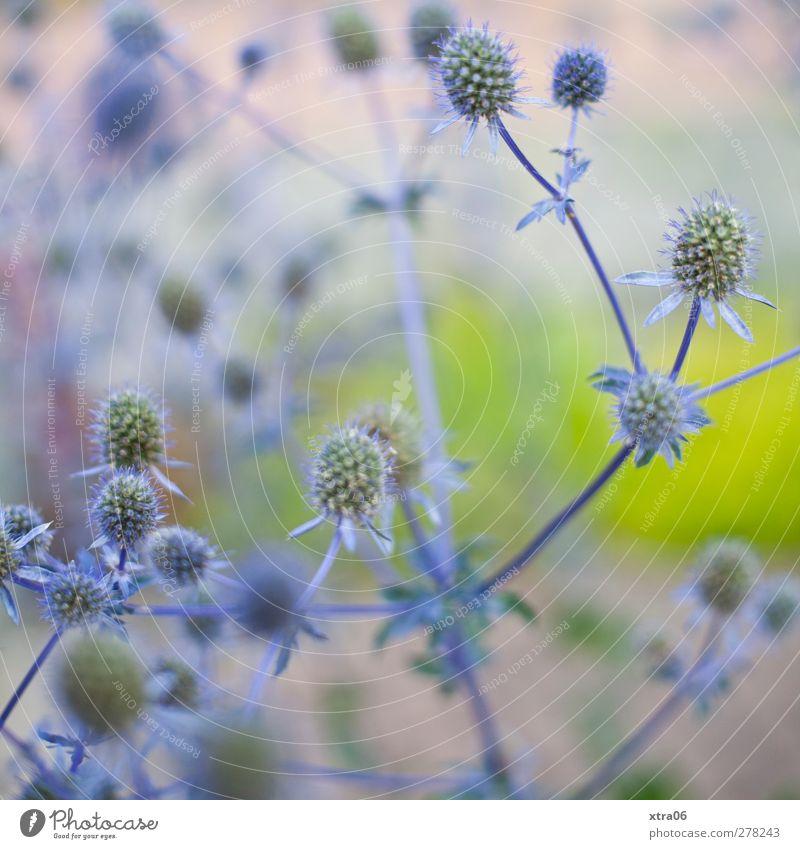Nature Blue Plant Flower Environment Elegant Bushes
