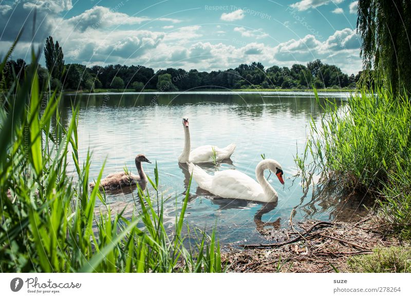 Sky Nature Water Green Beautiful Summer Animal Clouds Landscape Environment Baby animal Lake Bird Horizon Exceptional Wild animal