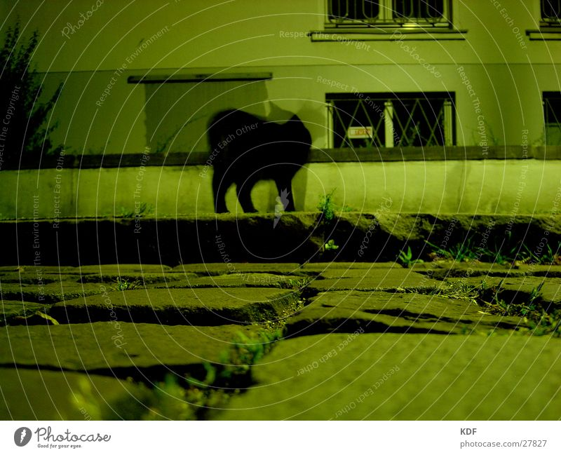 she sees me, she doesn't see me... Long exposure Cat Black Cobblestones Wall (barrier) Worm's-eye view green light mouse perspective KDF