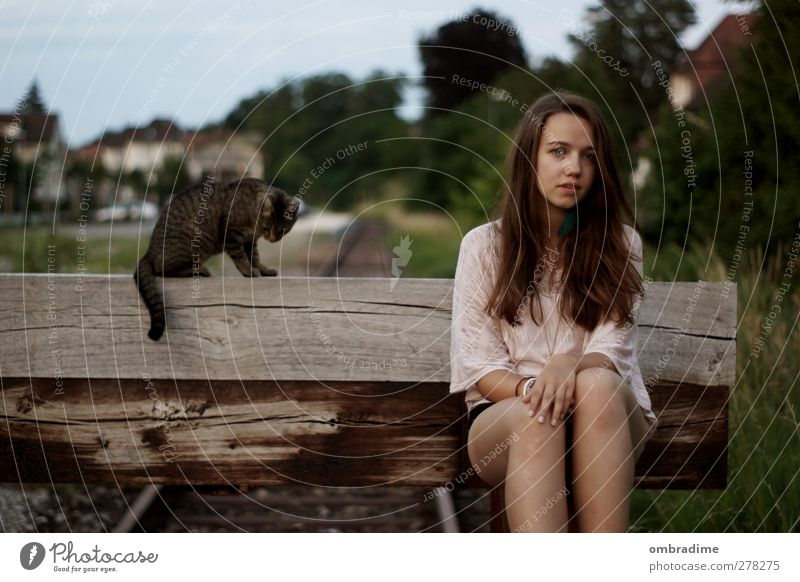 cats Harmonious Well-being Contentment Calm Human being Feminine Young woman Youth (Young adults) Woman Adults Life 1 Environment Nature Summer Brunette
