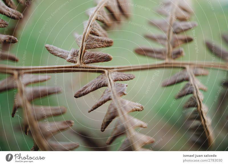 fern plant leaves Fern Brown Plant Leaf Abstract Consistency Garden Floral Nature Decoration Exterior shot fragility background Winter Autumn Spring Summer