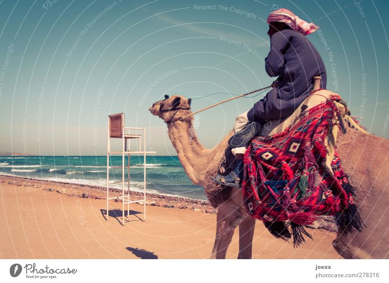 ride Masculine Man Adults 1 Human being Sky Horizon Summer Beautiful weather Coast Animal Speed Blue Brown Multicoloured Vacation & Travel Camel Ride