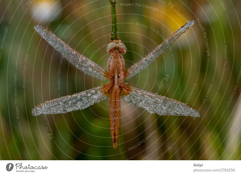 Dragonfly close up in the nature Beautiful Body Life Hunting Summer Environment Nature Plant Animal Leaf Park Wing Thin Long Natural Wild Brown Green White