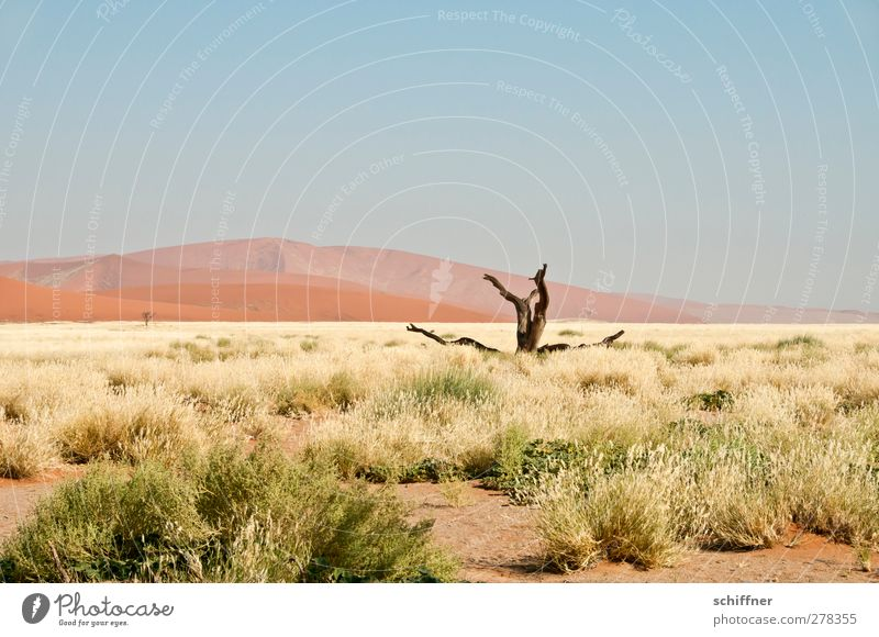 Nature Loneliness Landscape Far-off places Environment Death Grass Beautiful weather Desert Beach dune Dune Tree trunk Cloudless sky Climate change Grassland