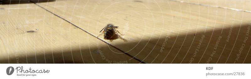 wasp Wasps Parquet floor Light Transport Shadow KDF Rear view