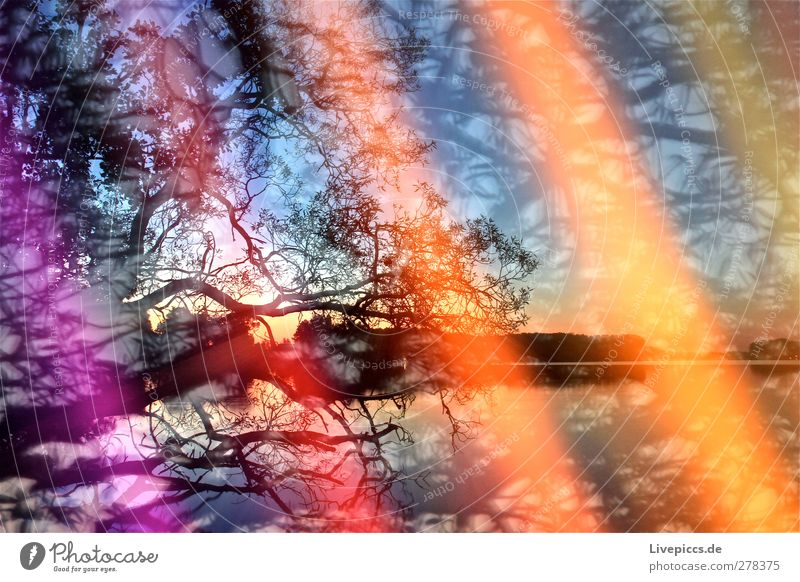 Colours on the lakeshore 1 Art Painter Environment Nature Landscape Plant Water Sky Cloudless sky Sunrise Sunset Sunlight Summer Beautiful weather Tree Leaf