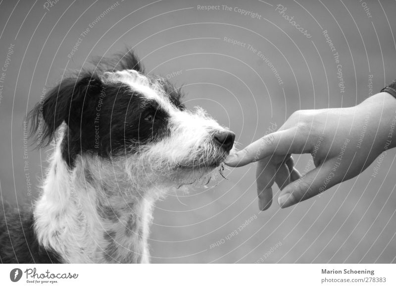 Communication without words Hand Pet Dog Animal face 1 Trust Attachment Black & white photo Exterior shot Animal portrait