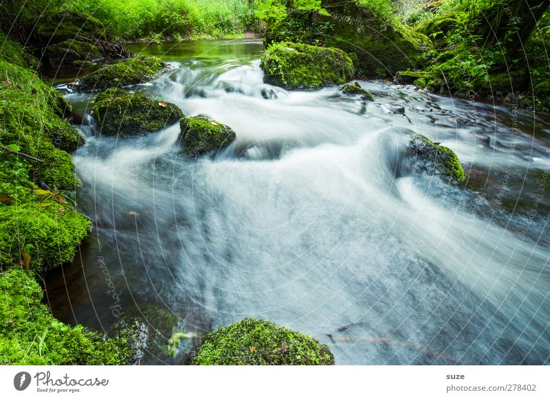 Nature Water Green Beautiful Plant Landscape Environment Stone Rock Natural Growth Wet Fresh Elements Idyll River