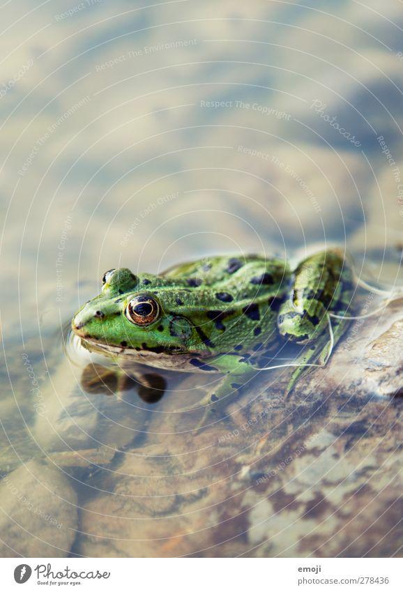 Nature Water Green Animal Environment Natural Wild animal Frog Pond