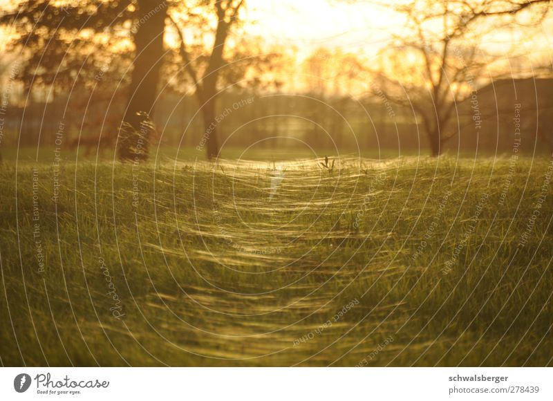 Sea of light Nature Landscape Summer Beautiful weather Grass Esthetic Glittering Wild Yellow Gold Green Orange Warm-heartedness Rope Spider's web Indian Summer