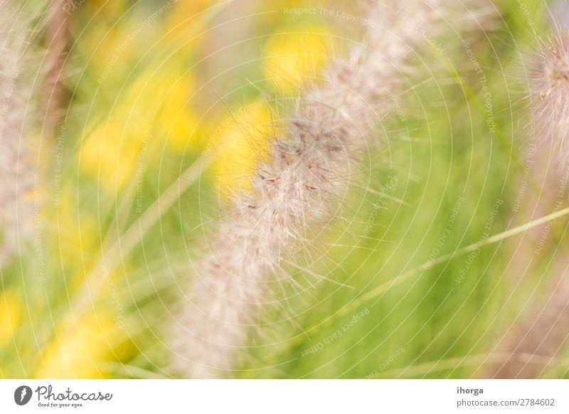 Background blur plants in spring with deep of field Nature Plant Colour Green Yellow Natural Grass Growth Blossoming Herbs and spices Stalk Deep Rural Organic