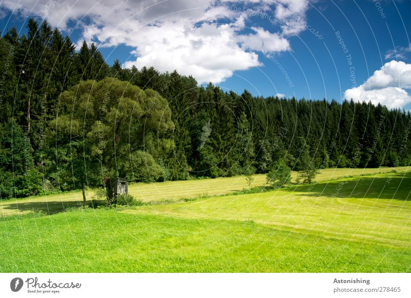 Sky Blue Green White Summer Tree Plant Leaf Clouds Black Forest Landscape Yellow Meadow Warmth Grass