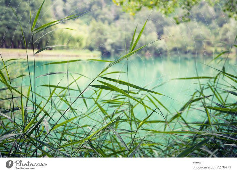 Nature Plant Landscape Environment Grass Lake Natural Fresh Bushes Turquoise