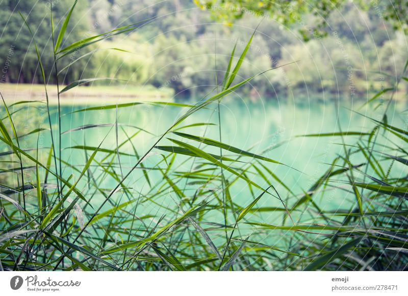 turquoise Environment Nature Landscape Plant Grass Bushes Lake Fresh Natural Turquoise Colour photo Exterior shot Close-up Deserted Day Shallow depth of field
