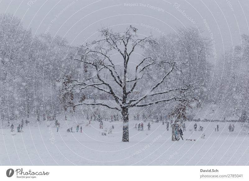urban winter scene Winter Snow Winter sports Human being Child Family & Relations Crowd of people Nature Snowfall Park Town Movement Together Gray White Joy