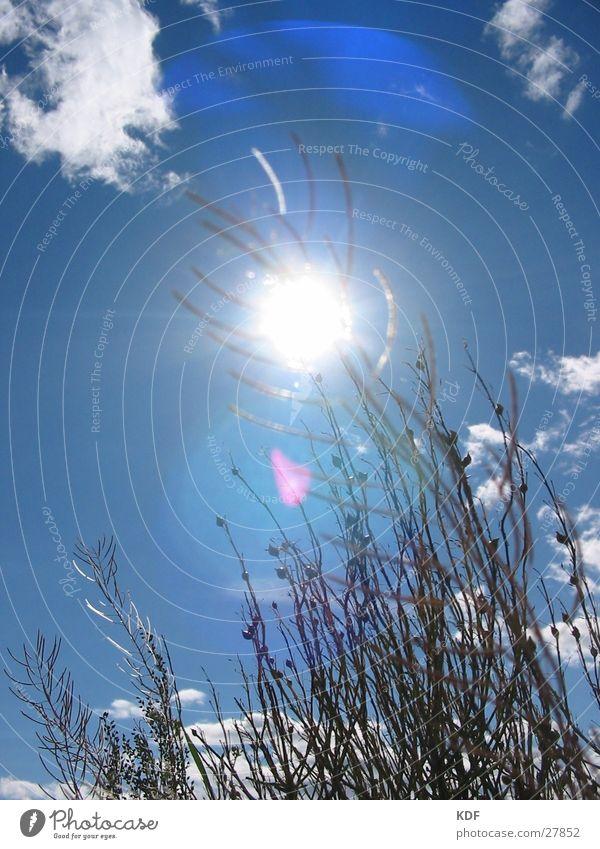 Sun Flower Summer Relaxation Grass Lie Boredom Blue sky Finland Wisp of cloud