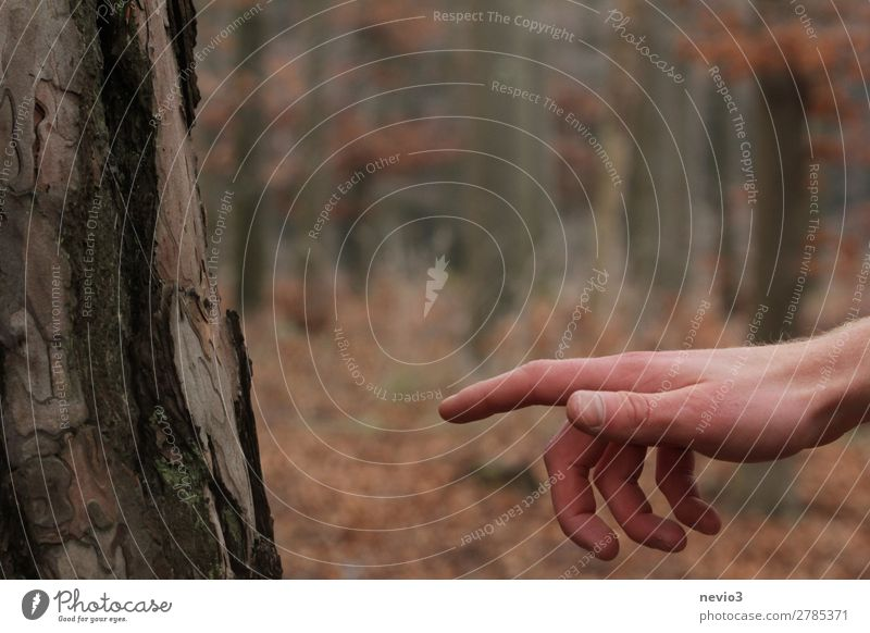 The Sistine Forest Arm Hand 1 Human being Environment Nature Orange Climate Clearing Life Creation obtained preserve Protection Environmental protection