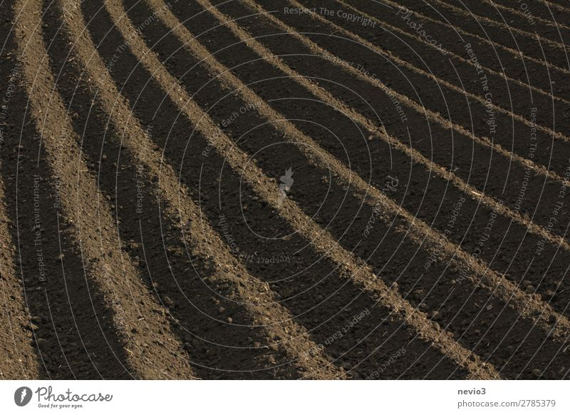 Freshly ploughed field Landscape Field Dirty Natural Beautiful Brown Earth Earthy Parallel Line Picked Plowed Agriculture Symmetry Rural Farm Ecological Harvest