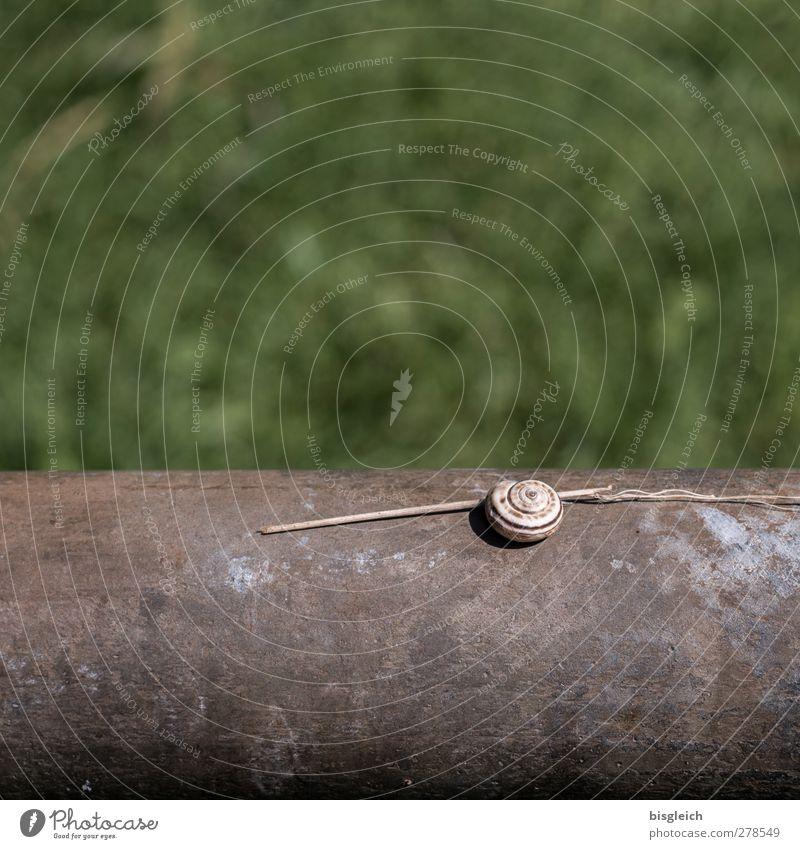 Green Beautiful Animal Small Brown Lie Snail