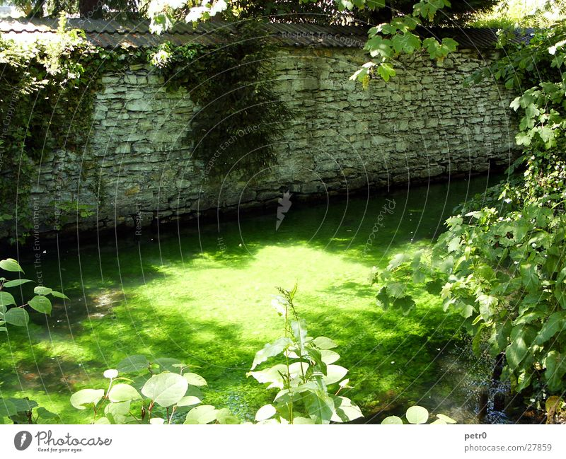 At the small stream in the park Wall (barrier) Rubble Brook Summer Midday sun Green Wet Shaft of light Glistening Light Aquatic plant Overgrown Park River Water