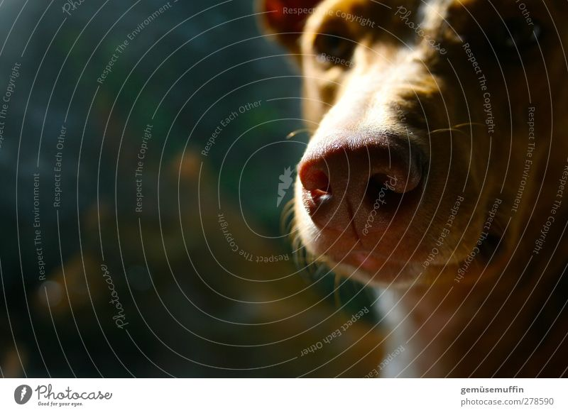 Me? Pet Dog Animal face 1 Cute Safety (feeling of) Warm-heartedness Love of animals Calm Dream Colour photo Interior shot Copy Space left Day Light Shadow