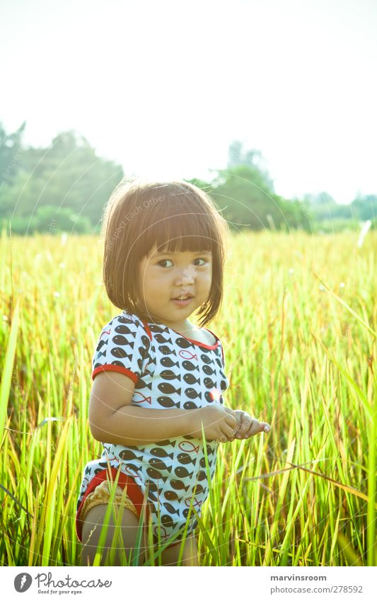 the fields of gold Human being Child Girl 1 1 - 3 years Toddler Beautiful weather Grass Cute Colour photo Exterior shot Morning Sunlight Sunrise Sunset