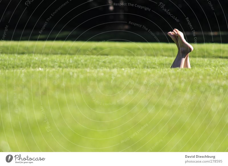 meadow diving Relaxation Calm Summer Life Feet 1 Human being Nature Beautiful weather Grass Foliage plant Garden Park Meadow Green Black Spring fever Lie Legs