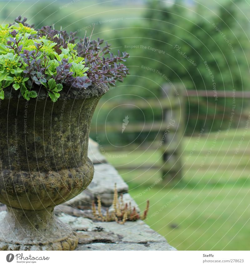 country life Garden Decoration Garden fence Flowerpot Nature Landscape Summer Plant Pot plant Garden plants Stone wall Fence Wooden fence Old Moody