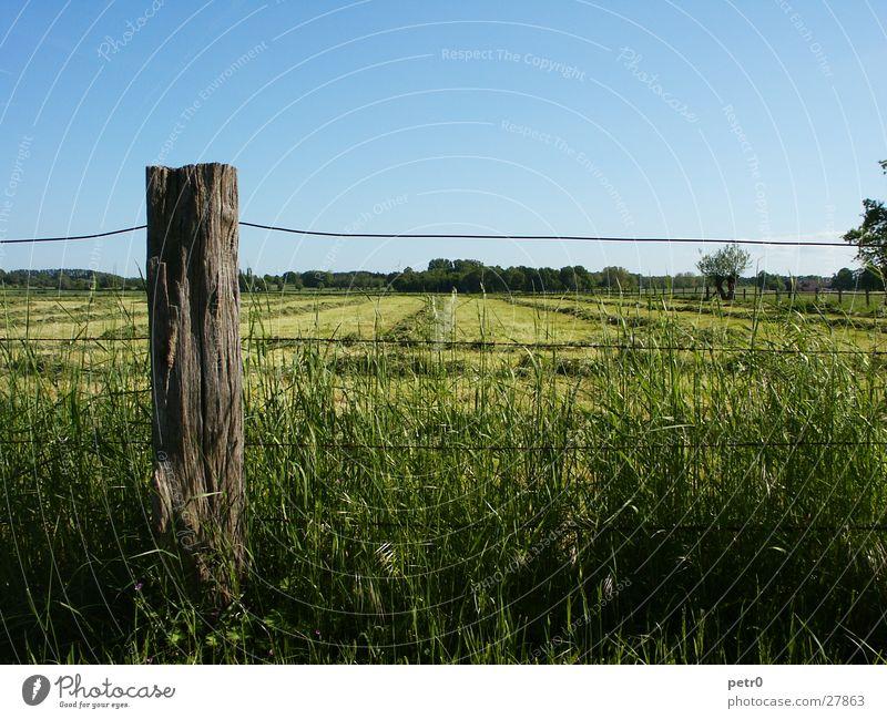 spring meadow Meadow Horizon Wire Fence Grass Lawn Green Pole Sky Blue Sun