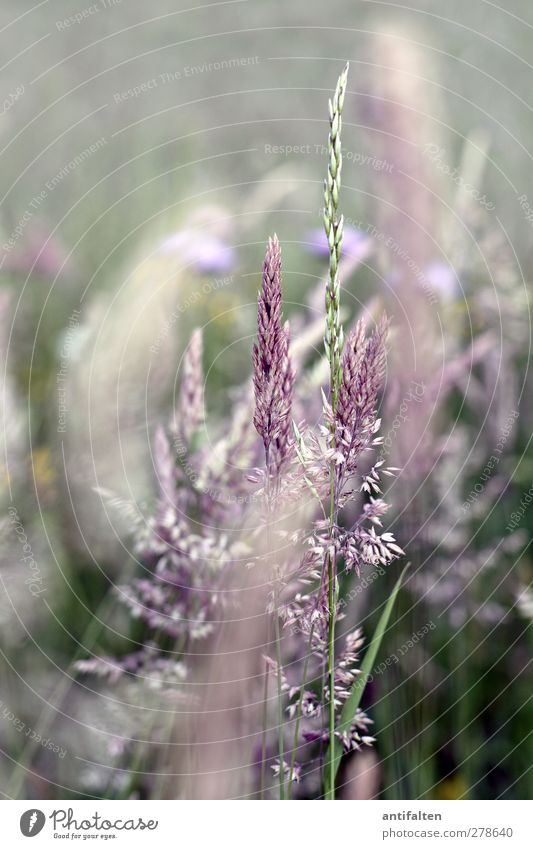 summer meadow Nature Plant Spring Summer Beautiful weather Grass Bushes Leaf Blossom Wild plant Park Field Blossoming Growth Green Violet Meadow Meadow flower