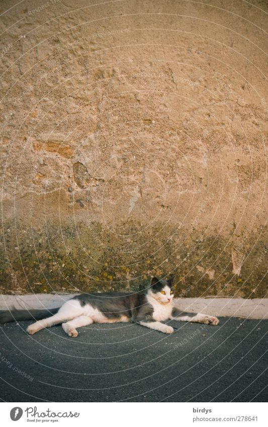 siesta Village Wall (barrier) Wall (building) Village road Roadside Pet Cat 1 Animal Lie Authentic Contentment Serene Uniqueness Town Camouflage Relaxation