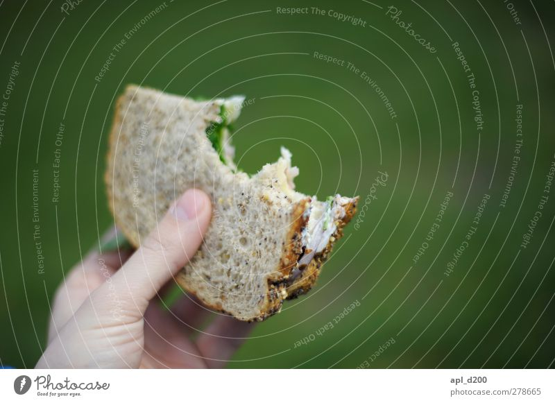 snack Food Bread Vegetarian diet Eating Authentic Green Colour photo Exterior shot Close-up Copy Space right Copy Space top Day Bright background Isolated Image