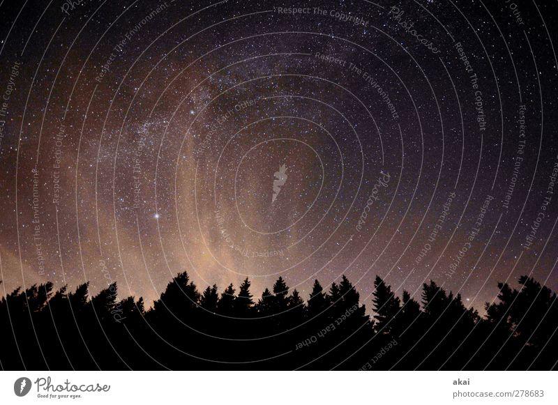Sky Nature Summer Tree Plant Clouds Black Forest Landscape Dark Orange Eternity Universe Night sky Galaxy