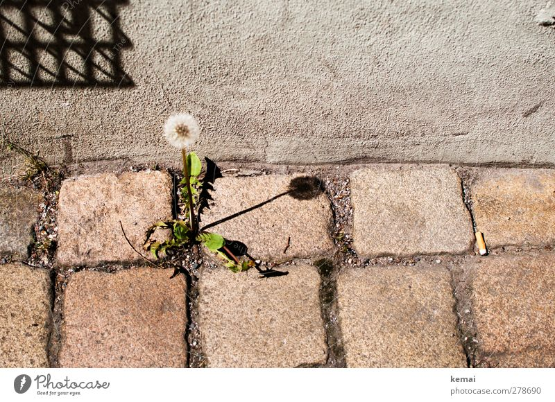 Ground standing sundial Environment Nature Plant Summer Beautiful weather Blossom Foliage plant Wild plant Dandelion Town Downtown Wall (barrier)