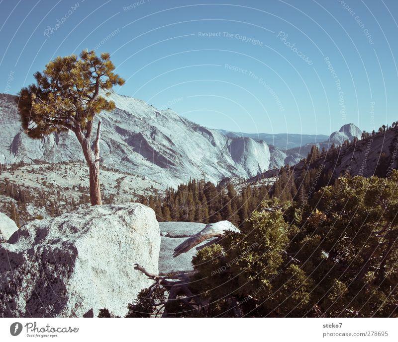 Nature Blue Green Summer Tree Landscape Mountain Gray Rock Bushes Peak Cloudless sky Granite Yosemite National Park