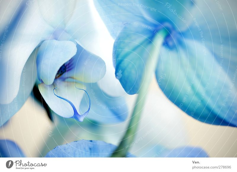 Nature Blue White Summer Plant Flower Blossom Bright Stalk Orchid