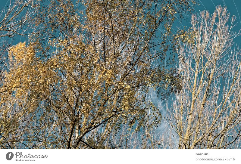 Nature Blue Tree Yellow Autumn Turquoise Autumnal Autumnal colours Automn wood Autumnal landscape Autumn sky