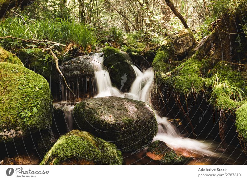 Little waterfall between stones in forest Forest Waterfall Stone River Rock Grass Tree Green Conceptual design Vantage point Wet Plant Nature Stream