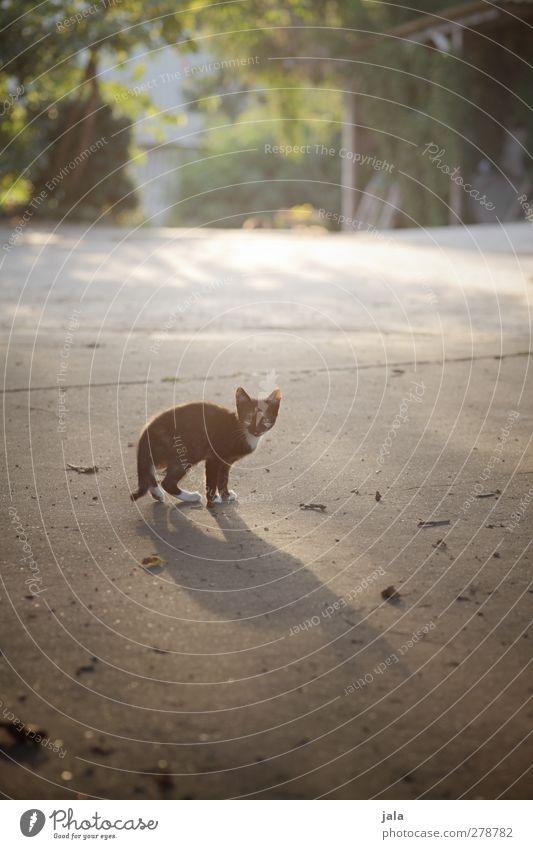 Still a mauz Plant Animal Pet Cat 1 Baby animal Looking Colour photo Exterior shot Deserted Copy Space bottom Day Light Shadow Back-light Animal portrait