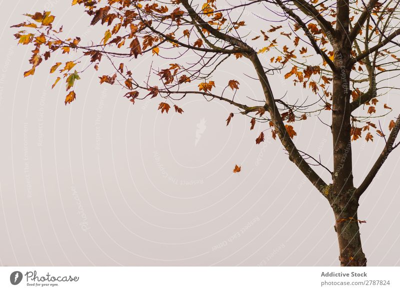 Tree with yellow leaves Leaf Yellow Wood Twig Autumn Forest Nature Bright Park Plant Natural Organic Garden Branch Design Fresh Conceptual design Wild Landscape