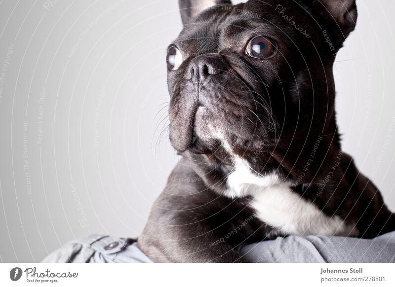 Dog Animal Black Cute Longing Pet Love of animals
