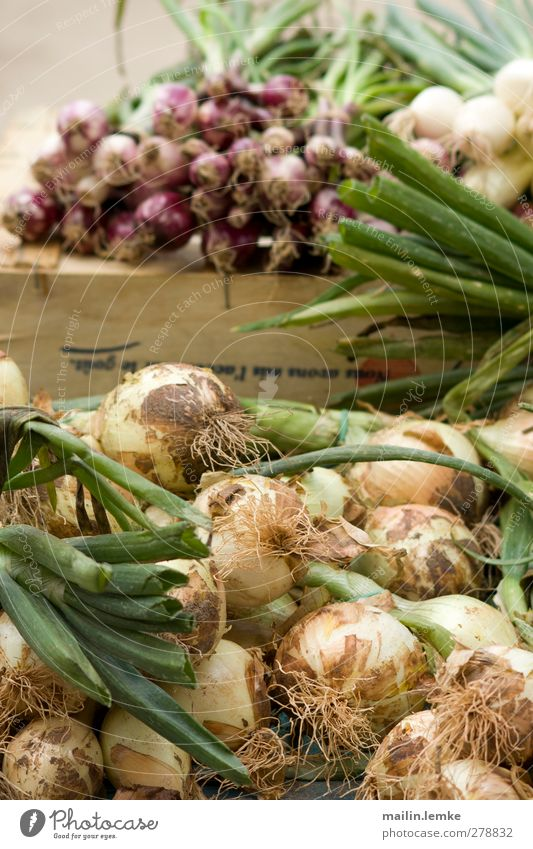 French market Onion Green Violet White Markets France Colour photo Exterior shot Day Central perspective