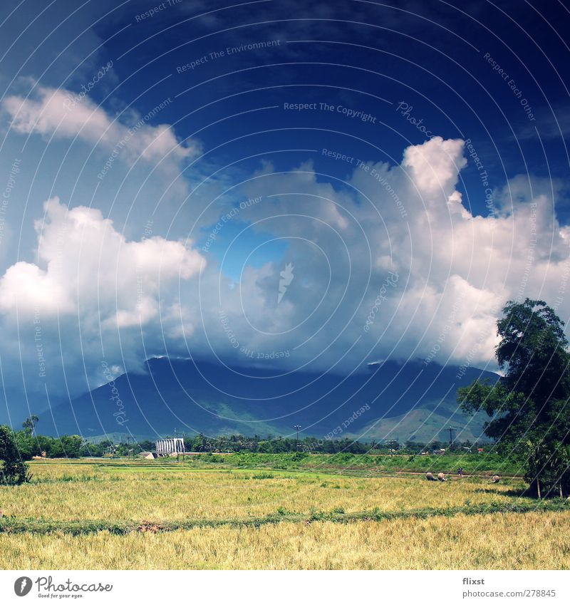 blanket of clouds Landscape Sky Clouds Summer Beautiful weather Nerviness Vietnam Mountain Field Colour photo Exterior shot Copy Space top Day