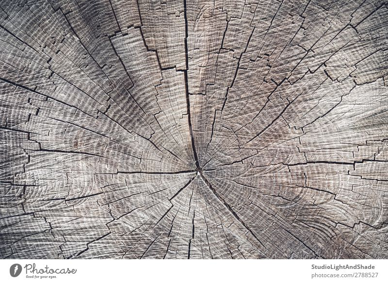 Cross section of an old tree Nature Tree Wood Old Natural Brown Colour Cut background Consistency Cross-section rings stump trunk Log beam Forestry sawed Timber