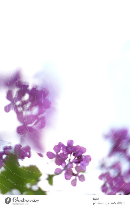 Green Plant Flower Violet