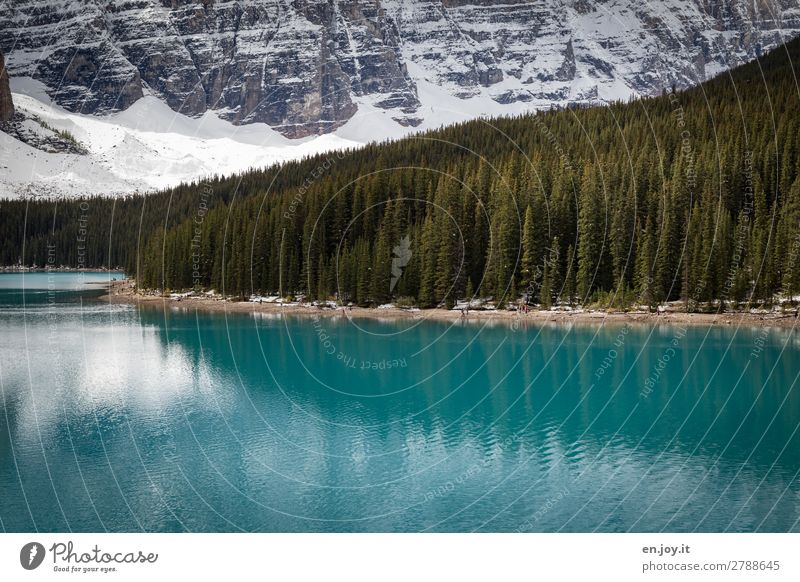 Other shore Vacation & Travel Tourism Trip Nature Landscape Beautiful weather Forest Hill Mountain Rocky Mountains Lakeside Moraine lake Turquoise Idyll Climate
