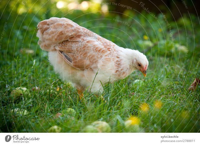 Nature Plant Green White Animal Baby animal Autumn Environment Meadow Happy Grass Garden Brown Walking Wing Observe