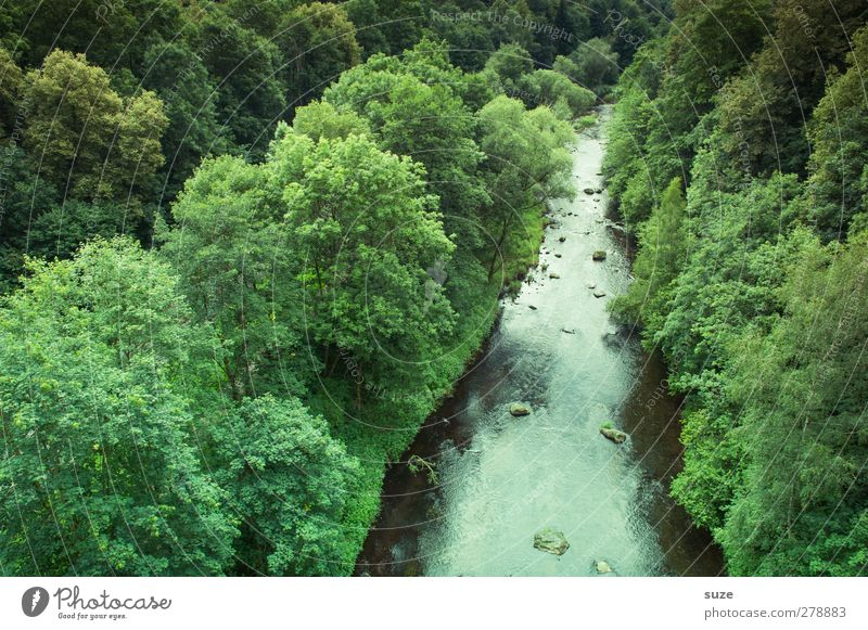 Nature Water Green Summer Tree Plant Forest Landscape Environment Climate Elements Beautiful weather Idyll River Saxony Valley