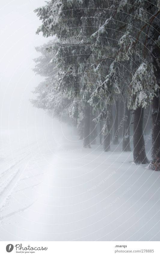 Nature Tree Winter Forest Landscape Environment Cold Snow Lanes & trails Moody Ice Weather Climate Fog Frost Freeze